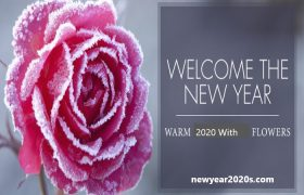New Year Flowers
