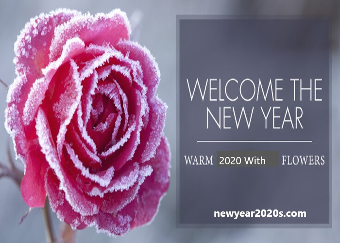 Photo of New Year Flower for HNY 2021 Decorations